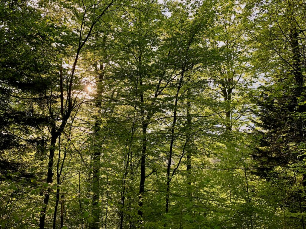 """Auf dem Rückweg vom Kybfelsen: """"grüne Hölle"""""""